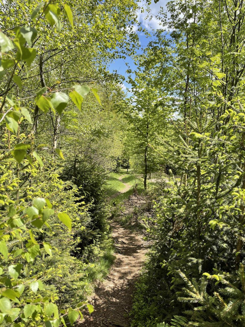 Waldpfad im Frühling auf dem Runderwanderweg 1 zum Großen Waldstein