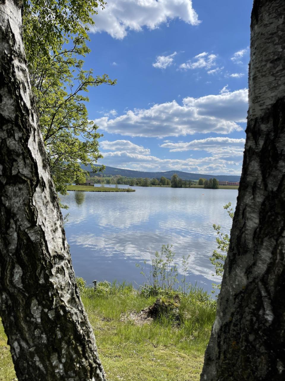 Blick auf den Weißenstädter See zwischen zwei Birken