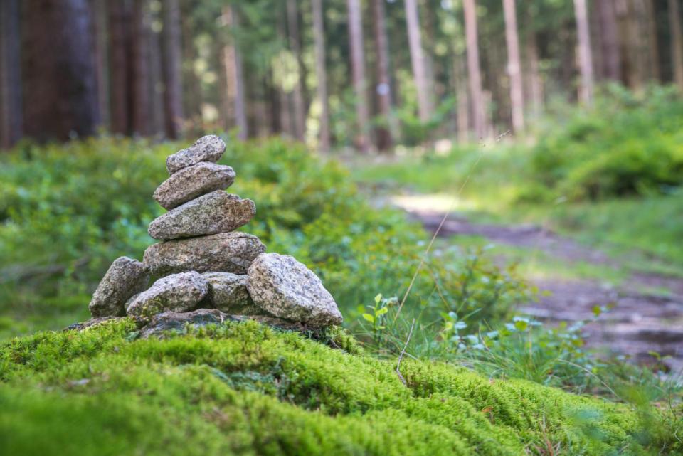 Waldgesundheit